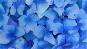 紫陽花 イメージ4