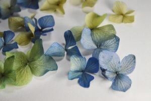 紫陽花のがくは、ひとつひとつが小さなお花のよう