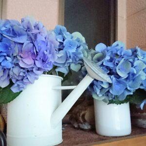 紫陽花のドライ・イン・ウォーター法