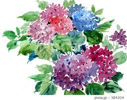 紫陽花 イメージ