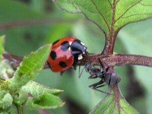 アリとてんとう虫