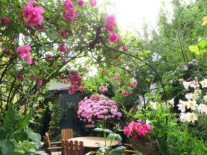 紫陽花の咲いている庭