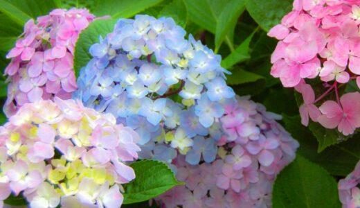 紫陽花の風水まとめ!玄関や庭に植えてはいけない?方角が大切?