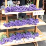 ラベンダーの切り花・生花を長持ちさせる7つの方法