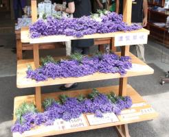 憧れのラベンダー切花販売