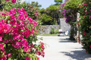 ハイビスカスの咲く庭