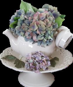 紅茶ポットに飾った紫陽花のドライフラワー