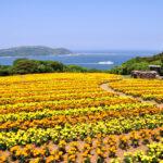 マリーゴールドの花が咲かない!考えられる7つの原因と対策!