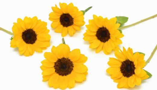 ひまわりのドライフラワーリース&押し花の作り方!簡単に長く楽しむアイデア集
