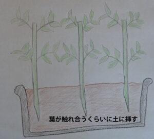 マリーゴールドを土に挿したイメージ