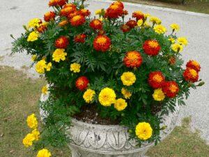 秋にもたくさんの花が咲きます