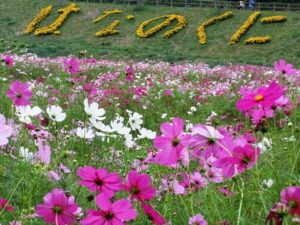くりはま花の国