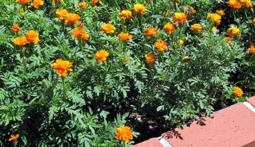 花壇の土作り!いい土の条件・必要な物や手順をまとめ!