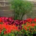 壁際の花壇