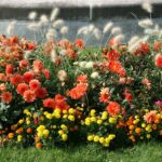 多種離の花