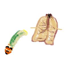 ハマキムシ