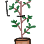キンモクセイの取り木