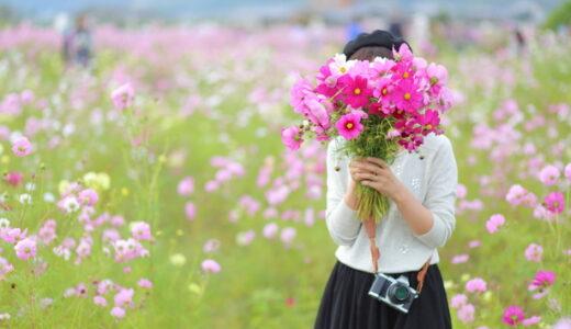 コスモスの花束をプレゼント!通販と店舗で値段や日持ちは違う?