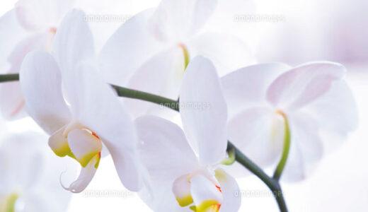 胡蝶蘭の花言葉まとめ!紫,青,赤,黄の色別で意味は違う?