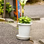 プラスチックの植木鉢