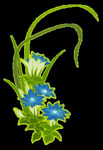 リンドウの花のイラスト