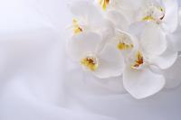 胡蝶蘭の水やり頻度・タイミングは?季節別の最適な水やり方法