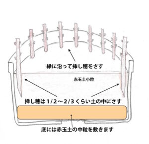 挿し穂の挿し方の図