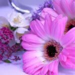 ガーベラのドライフラワー&押し花の作り方!前処理や簡単に作るコツは?