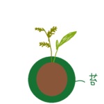 苔玉の構造