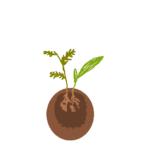 苔玉の中身