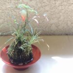 苔玉の育て方!水やりや肥料はどうする?
