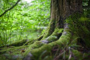 森に生える苔