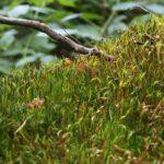 苔玉のカビ・虫の対処法!普通の農薬でいい?