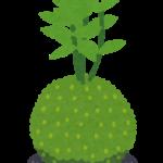 苔玉の簡単な作り方!中身はどうなってる?