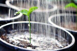 植物の芽に水を与えているところ