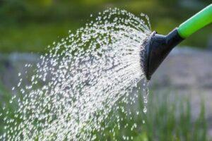 ジョロで水やりをしている様子