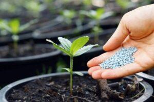 化成肥料を植物に与えるところ