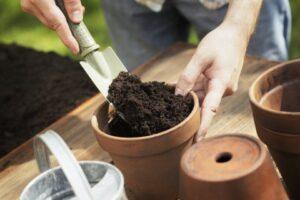 スコップで鉢に土をいれているところ