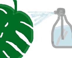モンステラの水やり
