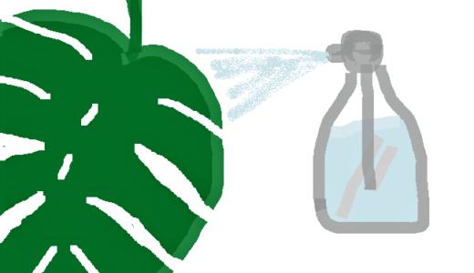 モンステラの水やり方法!タイミングや頻度、葉水の仕方は?