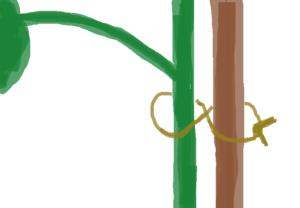 茎と支柱の結び方