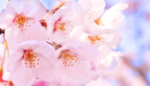 桜の種類・品種一覧!有名な種類の開花時期と特徴をまとめ!