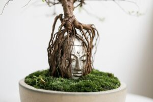 大仏を抱いたガジュマル盆栽