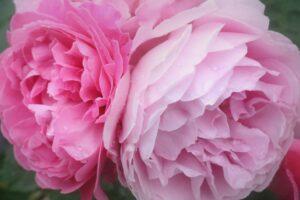 バラの咲く季節 四季 公園