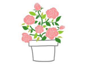 バラ植え替え