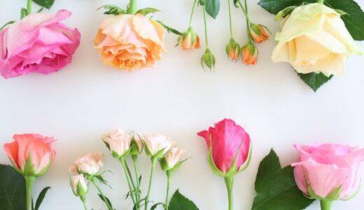 バラの押し花の作り方!簡単な下処理や便利道具で綺麗に作るコツ