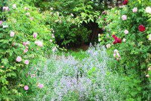 バラの花の庭