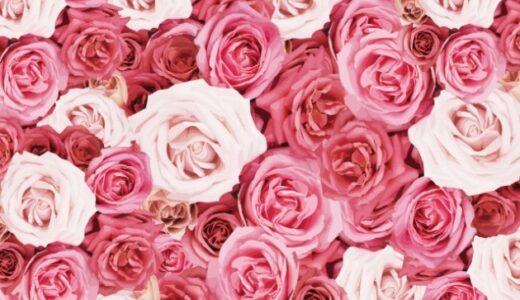 バラの種類・品種一覧!人気のバラの名前や色、特徴は?