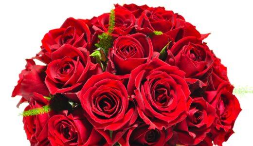 バラの挿し木方法!時期、鉢上げや切り花の場合はどうする?