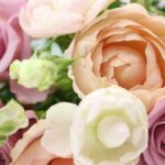 バラの植え替えまとめ!時期や土、地植えの場合の方法は?